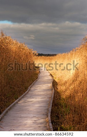 Wooden pathway through a swamp area with reeds - stock photo