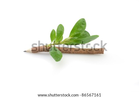Wooden pencil with leaves on the white  background