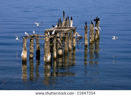 Wooden pier posts with birds - stock photo