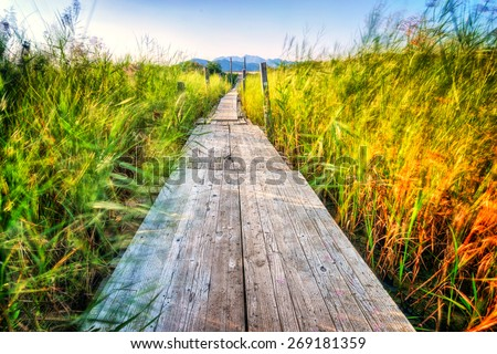 Wooden pier which extends across the marshes and greenery - stock photo