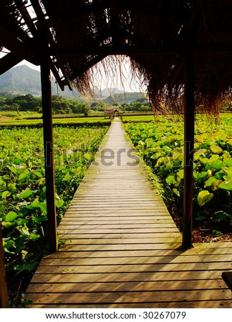 Wooden plank board walk in the field