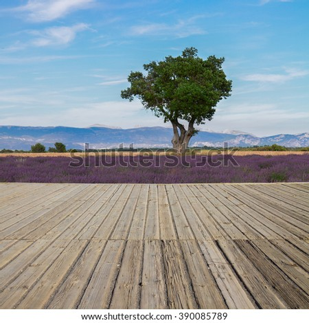Wooden planks and lavender field at summer day, France - stock photo