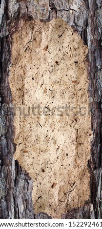 wooden plaque, backgrounds bark and wood texture - stock photo