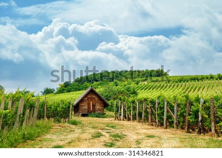 Wooden press house in old vineyard, summertime - stock photo