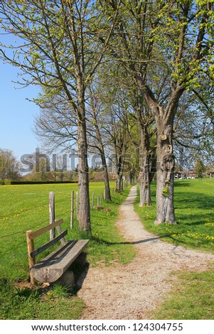 wooden relaxing bench and footpath through chestnut alleyway at spring time