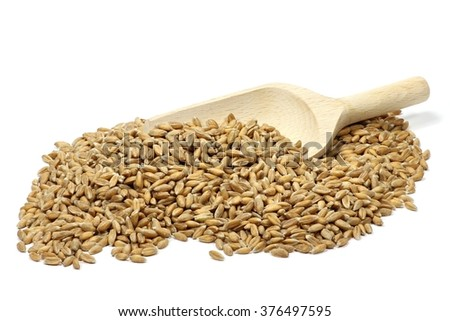 wooden scoop with spelt grains isolated on white background - stock photo