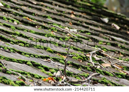Wooden shingles with moss on top - stock photo