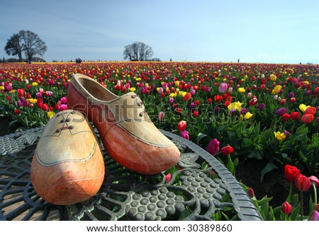 Wooden shoes and colorful outdoor tulip flower garden