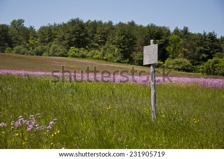 Wooden sign post without any words in a meadow with purple flowers, trees in background, blue sky - stock photo