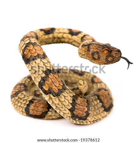 Wooden snake isolated on a white background - stock photo