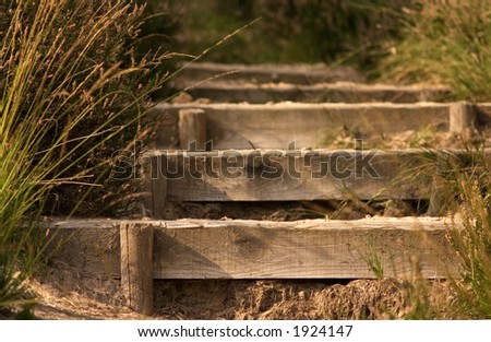 Wooden stair in a forest