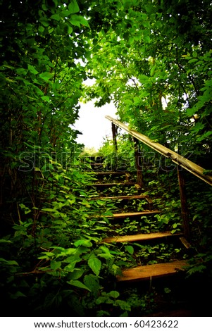 wooden staircase in a forest thicket
