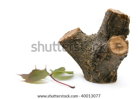wooden stump and a leaf isolated on white - stock photo
