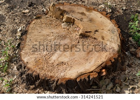 Wooden stump and sawdust
