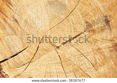 Wooden stump can be used for background - stock photo