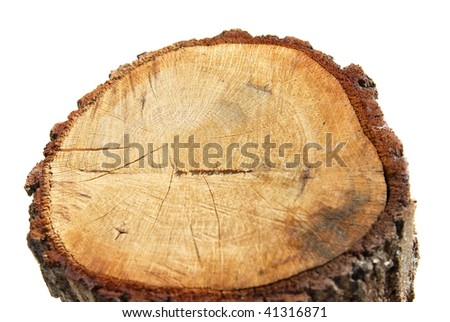 Wooden stump isolated on the white background - stock photo
