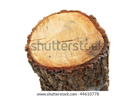 Wooden stump isolated on the white background