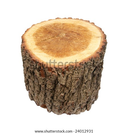 Wooden stump isolated on white.