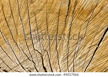 Wooden surface (oak) - stock photo
