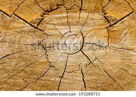 Wooden swirls in cut tree trunk organic background texture - stock photo