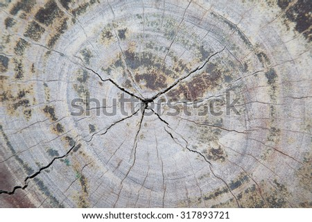 Wooden swirls organic background of tree stump.