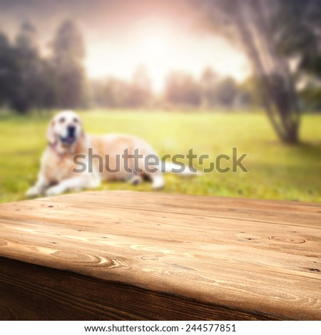 wooden table and dog  - stock photo