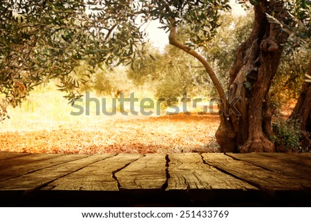 Wooden table with olive tree - stock photo
