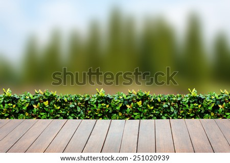 Wooden terrace with views of nature Pine Tree Forrest in the Montains  background