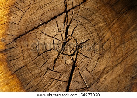 Wooden texture of a tree trunk with beautiful golden shades. - stock photo