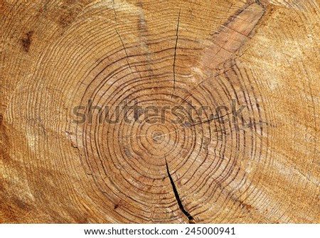 Wooden texture of cut tree trunk  - stock photo