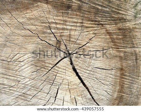 Wooden texture of cut tree trunk