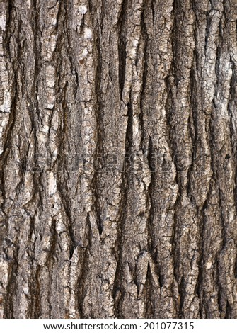 Wooden texture, Texture - a bark of an old oak - stock photo