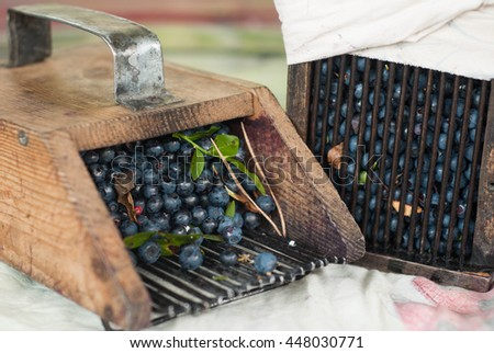 wooden tools are used to gather blueberries, a scattering of fresh forest berries