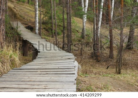 Wooden trail across spring forest.