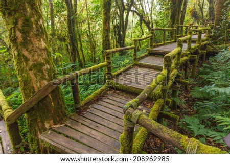 wooden trail bridge in tropical rain forest Chiang Mai northern of thailand - stock photo
