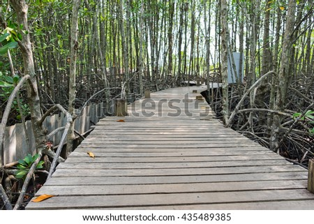 Wooden walkway bridge with mangrove tree in mangrove forest located at Prasae, Rayong, Thailand. - stock photo