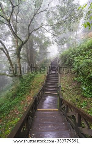 Wooden walkway in mist forest - stock photo
