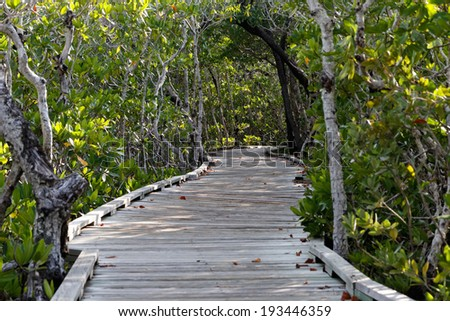 Wooden walkway leads through thick green forest of mangrove trees in the Florida Keys, Florida, USA. - stock photo