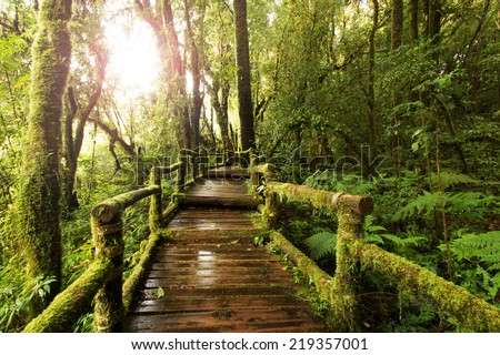 wooden walkway through in deep rain forest with morning light - stock photo