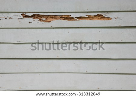 Wooden wall house with termites - stock photo