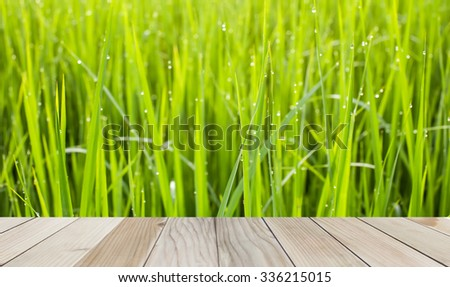wooden wall texture on background dew drops on the rice leaves green,blur and noise - stock photo