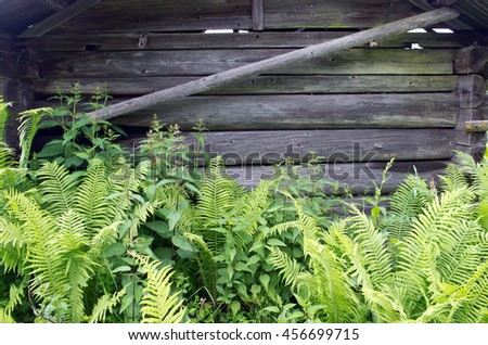 Wooden wall with close-growing ferns - stock photo