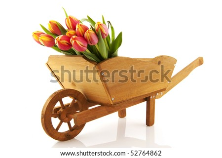 wooden wheelbarrow with plucked flowers isolated over white - stock photo