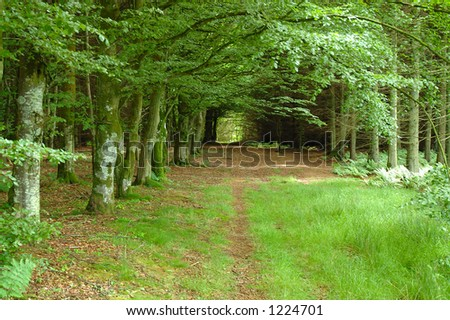 Woodland Glade - stock photo