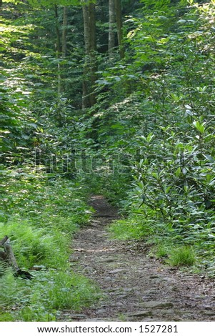 Woodland Path - stock photo