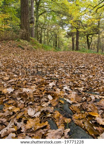 Woodland path with fallen leaves in fall