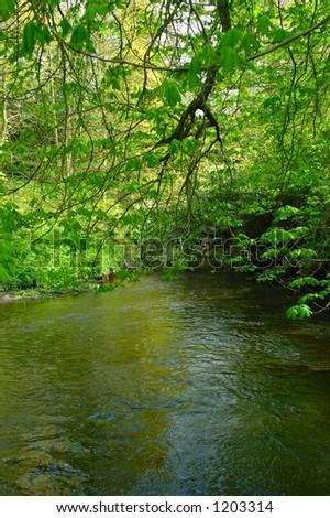 Woodland River - stock photo
