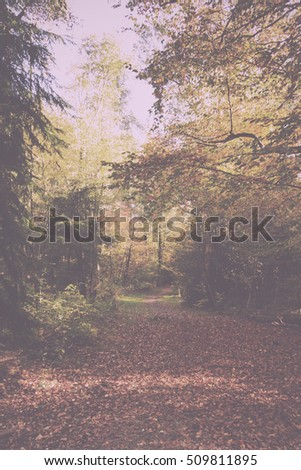 Woodland scene with autumn leaves in yellow and brown Vintage Retro Filter.