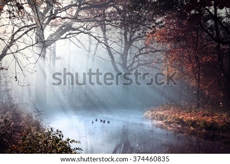 woodland scenery - stock photo