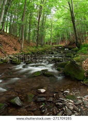 Woodland Stream in Carpathian Wood. - stock photo